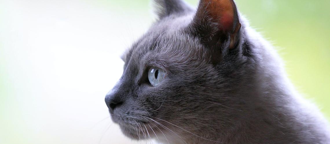 Chats : il faudrait les nourrir 4 ou 5 fois par jour
