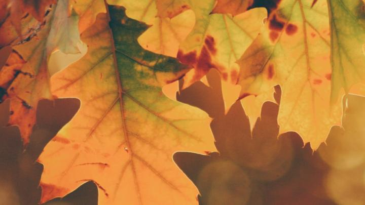 Rester en forme durant l'automne en mangeant !